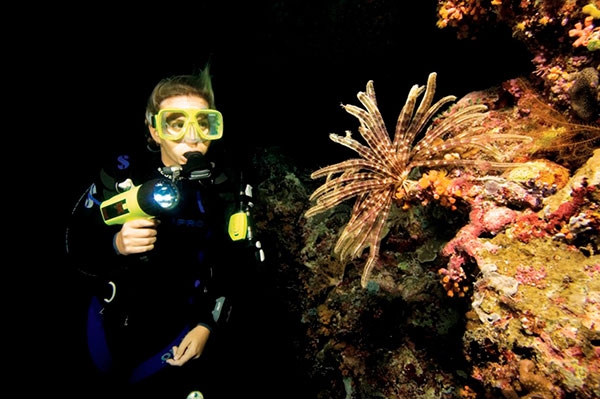 Picture of Night Diving